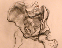 Pelvis Study 1