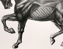 Horse Drawing Process