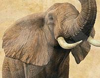 African Elephant | Stuart Jackson-Carter