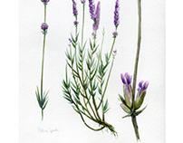 Botanic Art test