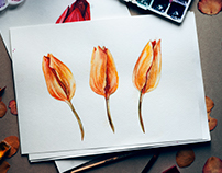 Watercolor tulips