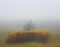 no nightingales just yellow trees II