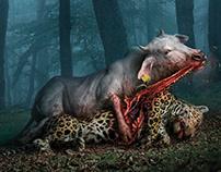 "PETA - ""Eating meat kills more animals than you think"""