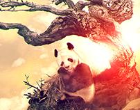 Bear  Panda - 2012