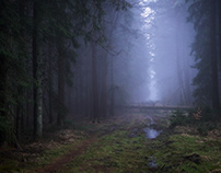 Sachsenwald I