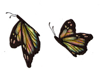 Animation/ butterfly