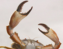 Surfrider foundation campaign _ 2012