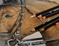 Horse - Derwent Graphitint Pencil Drawing