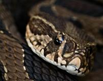 Reptiles,