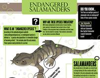 Salamander Infographic