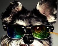 Dog's Fury