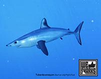 Portuguese Sharks