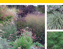 Ornamental Grasses for Cold Climates
