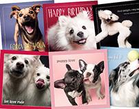 The Dog Studio Product Design & Branding