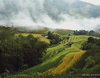 Hoang Su Phi during harvest season