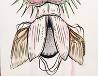 Venus Beetle