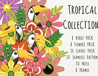 Tropical Birds Collection