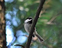 Birding As Meditation