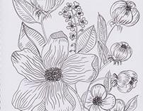 Fineliner floral sketch