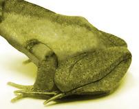 Frog - Duck