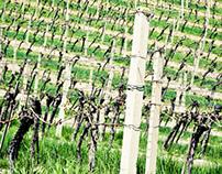 Austria : Wine Country