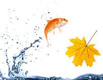 Warehouse Aquatics online assets