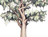 Liberty Tree Illustration