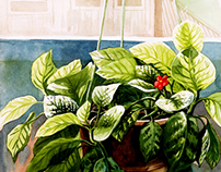 My watercolour painting-plants