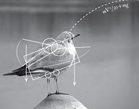 The Physics of Animals