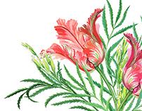 Tulips and Tagetes Minuta