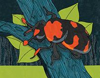 Endangered - American Burying Beetle