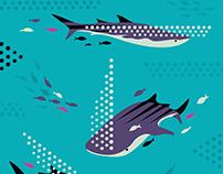 Whale Shark illustration