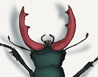 stagbeetle   animation experiences