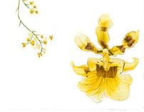 Natural history illustration   [ plants ]