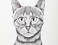 Illustration - Ink Cat & Rabbit (2016)