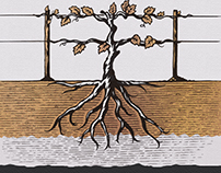 Rugged Roots Wine Label Illustrated by Steven Noble