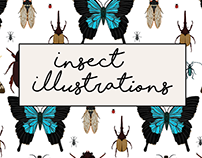 Insect Illustrations - Winter 2017