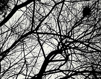 Photo - Branches