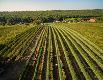 Vins winery aerial photography