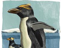 Животные описанные Беллинсгаузеном