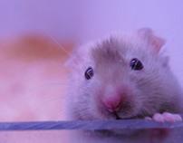 Everybody likes the mice!