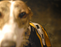 "Photography- ""Greyhounds"""