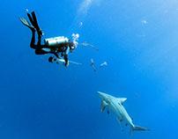 shark days