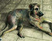 Animales - Animals - Animais - Animaux