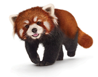 Telus Red Pandas – Retouching