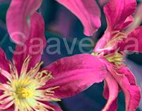Flores de Hadas