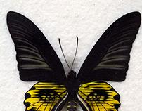Mariposas astrales