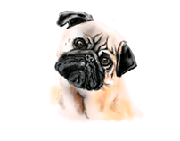 Pug digital painting #brush_tool_only_challenge