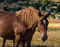 Wild Horses (n.1)
