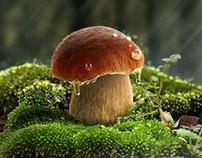 Mushroom tutorial